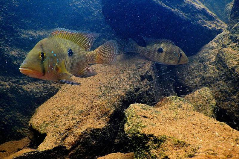 Peixes são animais inteligentes